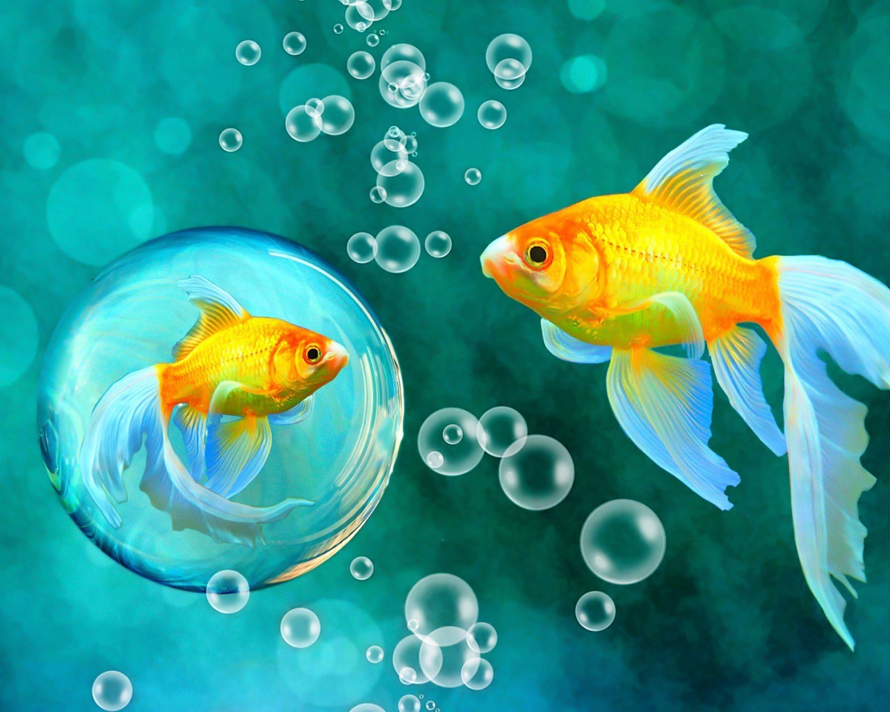 analysis of love song with two goldfish